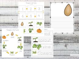 Life Cycle Of A Pumpkin Seed Worksheet by Free Pumpkin Life Cycle Worksheets Prek 3rd
