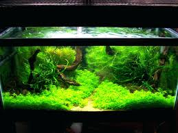 Aquarium Aquascaping Aquariums Archives Beck Designs Appartment ... Home Accsories Astonishing Aquascape Designs With Aquarium Minimalist Aquascaping Archive Page 4 Reef Central Online Aquatic Eden Blog Any Aquascape Ideas For My New 55g 2reef Saltwater And A Moss Experiment Design Timelapse Youtube Gallery Tropical Fish And Appartment Marine Ideas Luxury 31 Upgraded 10g To A 20g Last Night Aquariums Best 25 On Pinterest Cuisine Top About Gallon Tank On Goldfish 160 Best Fish Tank Images Tanks Fishing