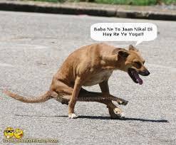 Dog Doing Baba Ramdev Yoga