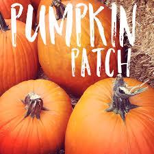Denver Area Pumpkin Patches by Pumpkin Patch Colorado Alpines U0026 Wildflower Farm