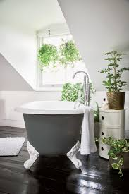 Fake Plants For The Bathroom by Bathroom Design Wonderful Griselinia Rue Plant Orchid In