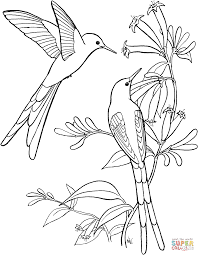 Hummingbird Coloring Page To Print Free Large Size