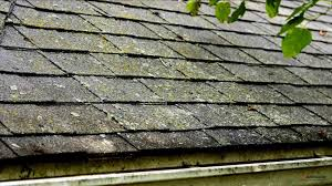 moss on roof tiles landmark shingles review moss removal home