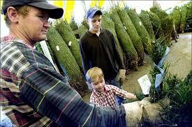 Bonita Springs Rotarys Annual Tree Sale Under Way