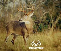 Whitetail Buck Wallpapers Country