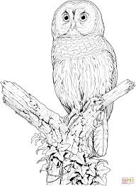 Click The Perched Barred Owl Coloring