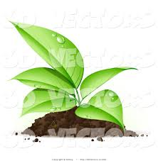 3d Vector Clipart of a Sprouting Organic Seedling Plant with Dew on Its Green Leaves