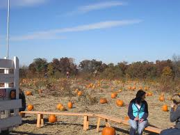 Pumpkin Patch Donnellson Iowa by Schuster U0027s Pumpkin Patch U0026 Corn Maze Dubuque Ia Photos U0026