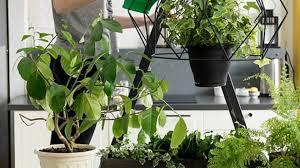 6 pflanzen die für bessere luft und ein gutes raumklima sorgen