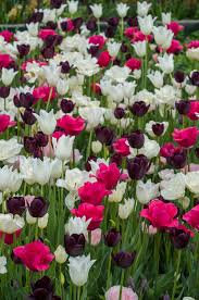 flowers amazing flower bulbs a flower bulb is really an