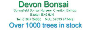 bonsai springfield nursery