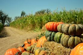 El Paso Pumpkin Patch by A Maze Of An Adventure U2013 Border Heritage Magazine
