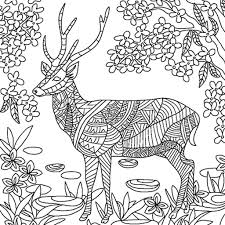 Colorfy Adult Coloring For Animals Pages Amazonde Apps Fur Android