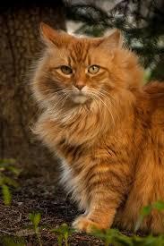 orange cat names best 25 names for cats ideas on kitten names