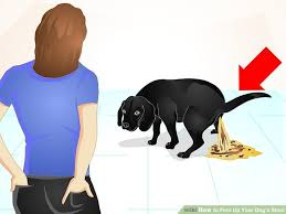 Turkey And Pumpkin For Dog Diarrhea by 3 Ways To Firm Up Your Dog U0027s Stool Wikihow