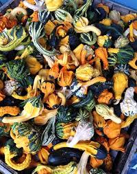 Pumpkin Picking Nj Near Staten Island by Where To Pick Apples And Pumpkins Close To Nyc Travel Purewow