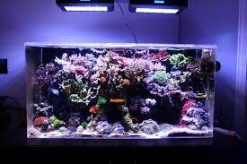 eclairage led pour aquarium eau de mer recifal puissance leds pour un 1000l l éclairage
