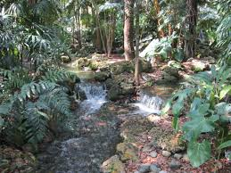 Waterfall in the Rainforest at Fairchild Botanical Garden in