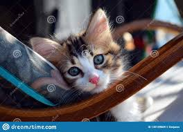 Cat Leaning Against A Rocking Chair Cushion Stock Image ...