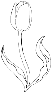Collection Of Tulip Coloring Sheets