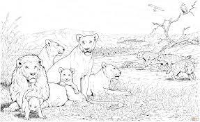 24 Realistic Lion Coloring Pages 7501 Via Supercoloring