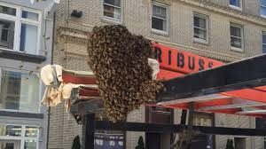 PHOTOS: Thousands Of Bees Swarm Truck On Geary Street In San ... Arnia Hive Monitors On Twitter Apimondia2017 Tech Tour Bee Lorry Bee Busters Truck Moving Bees Is Not Easy Slide Ridge Notes Video Driver Cited In Truck Crash 6abccom Brown Cat Bakery Transport Meet The Biobee Youtube Why Are So Many Trucks Tipping Over The Awl 14 Million Spilled I5 Everybodys Been Stung Honeybees Travel 1000 Miles To Pollinate Nations Crops Bbj Today 2018 Hino 817 4x4 Flat Deck