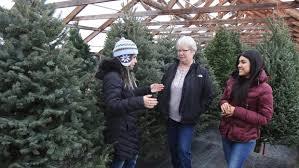 Fresh Cut Christmas Trees At Menards by Tree Traditions Jamestown Sun