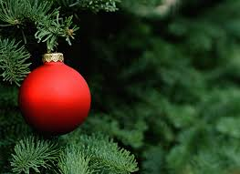 Best Smelling Christmas Tree Types by Why Christmas Trees Smell So Good