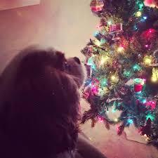 Best Kind Of Christmas Tree by Sweet Holly Belle Sweet Recipeas