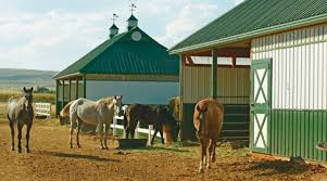 Successful Horse Boarding At Your Barn - Expert Advice On Horse ... Designing Your Stable For Fire And Emergency Safety Exploring Connecticut Barns Uconnladybugs Blog Barn Pros Projects Gallery Horses Pinterest Horse 111 Best Riding Arenas Animal Care Sheds Water Wheels Dog Breyer Classics 3horse Play Set Walmartcom Successful Boarding At Expert Advice On Horse Pasture In Central Alabama Shelclair 10 Tips Farms Stables To Get Ready Spring The Stanford Equestrian Horses Some Of The Horses At Barn Horseback Lancaster