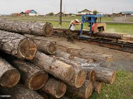 Tree Trucks Being Sawn Into Timber Stock Photo | Getty Images Orange Tree Wooden First Trucks Pack Of 3 At John Lewis Partners Stock Photos Images Alamy Convoy Utility And Removal On The Way North I95 Davey Removal October 13th 2013 Toronto On Youtube Pine Tree Logs Being Moved By Logging Trucks Photo 123598464 Wright Service Reaps Rewards From Long Forestry Bucket Affordable How To Ensure Efficient Vocational Truck Specifications Equipment For Sale A Better Arborist American Historical Society