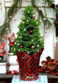 Potted Christmas Trees For Sale by 35 Picture Perfect Christmas Tree Ideas You Have Never Seen Before
