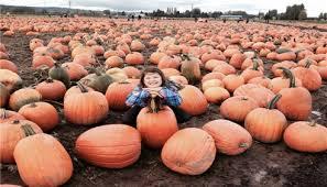Kent Farms Pumpkin Patch by Lorri Munsey Snyder Farmers Insurance Agent In Kent Wa