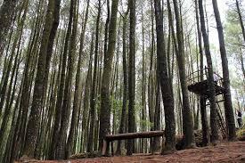 Sewa Elf Jogja Ke Hutan Pinus Mangunan