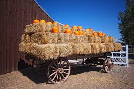Mccalls Pumpkin Patch Albuquerque Nm by Mccall U0027s Pumpkin Patch Moriarty Nm Been Here Pinterest