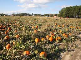 Pumpkin Farms In South Georgia by 10 Pumpkin Patches To Visit In Georgia This Fall Tripstodiscover Com