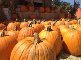 Homemade Fertilizer For Pumpkins by Ridiculously Awesome Ideas For Leftover Pumpkin Innards Tarpon