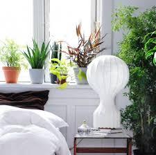 zimmerpflanzen pflegetipps living at home