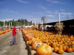 Pumpkin Patch San Fernando Valley Ca by La Farm Forneris Farms Harvest Festival Starts This Weekend
