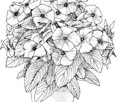 Realistic Flower Coloring Pages Adult For Adults Flowers