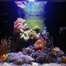 Soft Coral Tank - Aquascaping Forum - Nano-Reef.com Community Home Design Aquascaping Aquarium Designs Aquascape Simple And Effective Guide On Reef Aquascaping News Reef Builders Pin By Dwells Saltwater Tank Pinterest Aquariums Quick Update New Aquascape Of The 120 Youtube Large Custom Living Coral Nyc Live Rock Set Up Idea Fish For How To A Aquarium New 30g Cube General Discussion Nanoreefcom Rockscape Drill Cement Your Gmacreef Minimalist 2reef Forum