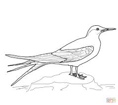 Dibujo Para Colorear De Frailecillo Un Alce De Agujeros Aves