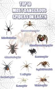 25+ Unique Spider Identification Chart Ideas On Pinterest | Spider ... Spiders At Spiderzrule The Best Site In World About Spiders 5 Venomous Found Colorado Outthere 109 And Webs Images On Pinterest Nature Ohios Biting Spidersrule The Barn Spider Pets Cute Docile Bug Eric Sunday Western Spotted Orbweaver Araneus Gemmoides Wikipedia Poisonous Georgia