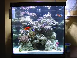 Aquascape On New 30G Cube - General Discussion - Nano-Reef.com ... Is This Aquascape Ok Aquarium Advice Forum Community Reefcleaners Rock Aquascaping Contest Live Rocks In Your Saltwater Post Your Modern Aquascape Reef Central Online There A Science To Live Rock Sanctuary 90 Gallon Build Update 9 Youtube Page 3 The Tank Show Skills 16 How Care What Makes Great Large Custom Living Coral Aquariums Nyc