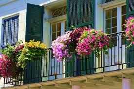 How To Choose Flowers For Balconies In Small Apartments