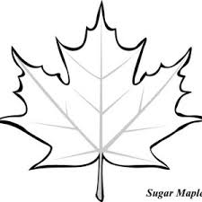 Sycamore Maple Leaf Coloring Page Kids Play Color