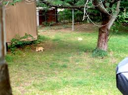 Blonde Backyard Bunnehs! By Marmelmm -- Fur Affinity [dot] Net Soccer Backyard Goals Net World Sports Australia Franklin Tournament Steel Portable Goal 12 X 6 Hayneedle Floating Backyard Couch Swing Kodama Zome Business Insider Procourt Mini Tennis Badminton Combi Greenbow Number 1 Rated Outdoor Systems For Voeyball Pvc 10 X 45 4 Steps With Pictures Golf Nets Driving Range Kids Trampoline Bounce Pro 7 My First Hexagon Jugs Smball Packages Bbsb Hit At Home Batting Cage Garden Design Types Pics Of Landscaping Ideas