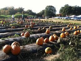 Lane Farms Pumpkin Patch by Fresh Picks Of Fall