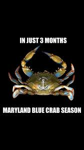 Crab Pot Christmas Trees Davis Nc by 20 Best Crabs Images On Pinterest Crabs Maryland And Chesapeake Bay