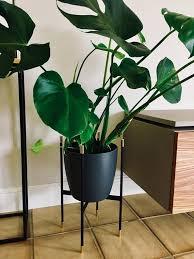tolle wohnzimmer pflanze mit blumenständer blumenhalter